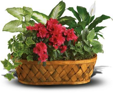 Flower and Plant Baskets