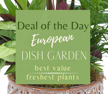 European Dish Garden Deal of the Day